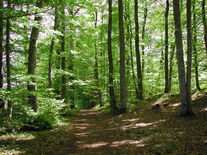 Goumoens forest